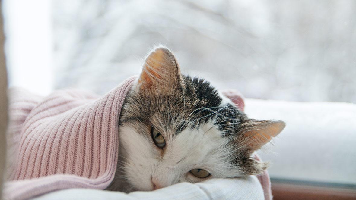 kronisk njursvikt katt