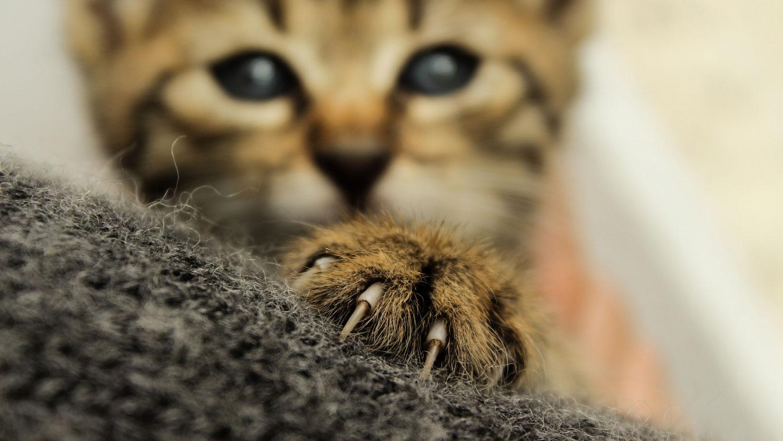 måste man klippa kattens klor